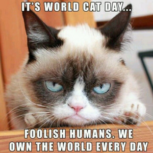 grumpy-cat-meme-sadden-your-day (17)