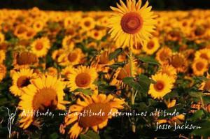 url=http://www.pics22.com/sunflower-scrap-for-facebook/][img] [/img ...