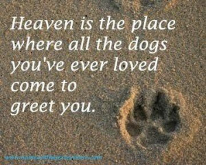 Dogs are heaven quote