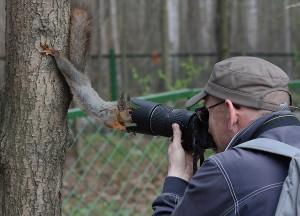 Funny Squirrel Closeup Photo
