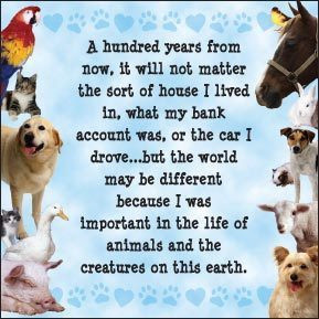 Adopt, don't shop. If you can't adopt, foster. If you can't foster ...