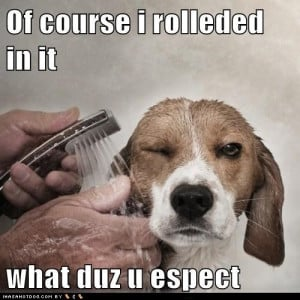 funny-dog-pictures-of-course-i-rolleded-in-it-what-duz-u-espect.jpg