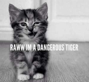 Raww_I_m_a_dangerous_tiger.jpeg