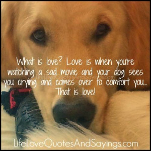 What is love? Love is when you're watching a sad movie and your dog ...