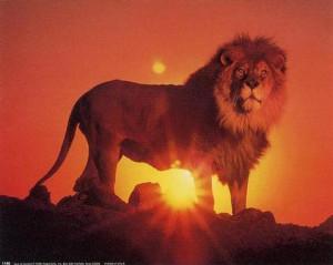 ... foton lion konstruktion photoshop photos lion design photoshop