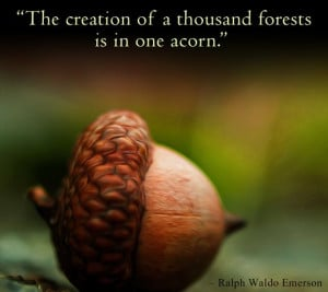 The power of an acorn. #nature #quotes