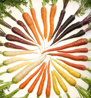 Carrot color wheel, the variety in Mother Nature!!!!