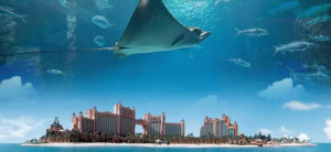 the reef atlantis and harborside resort atlantis paradise island ...