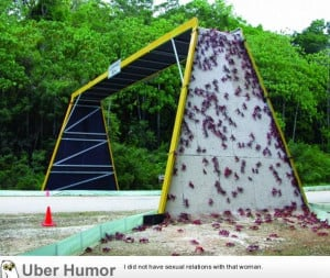 bridge made for local crab population | Funny Pictures, Quotes, Pics ...