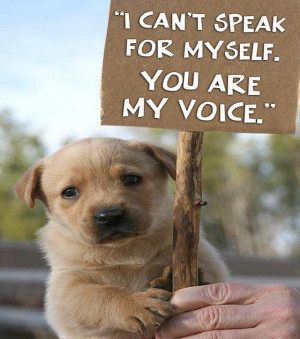 Quotes-about-animal-abuse-and-animal-rights