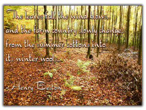 more quotes pictures under autumn quotes html code for picture