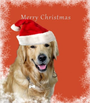 Posts related to Dog christmas cards sayings