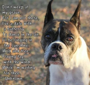 Real Life Rainbow Bridge Stories 'The Boxer and the Butterfly'
