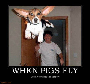 Funny Beagle Pictures With Captions Funny picture clip: best