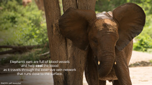Quote About Elephants