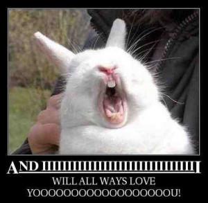 funny singing rabbit