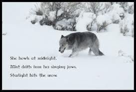 native american wolf quotes