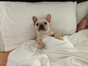 ... . Living in Rhode Island. Father of a French Bulldog named Chopper