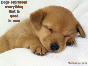 Dogs Quotes: Cute Dog Puppy With Inspirational Quote