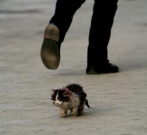 Sans aide un chaton abandonné n'a aucune chance