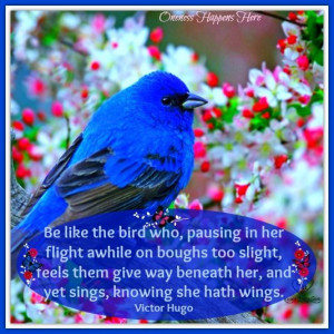 Blue Bird with Victor Hugo Quote https://www.Facebook.com ...