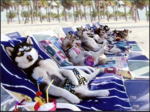 Dog Funny Pictures: Dog vacation