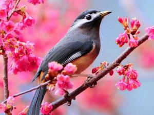 beautiful-spring-bloom-spring-33876232-670-503.jpg
