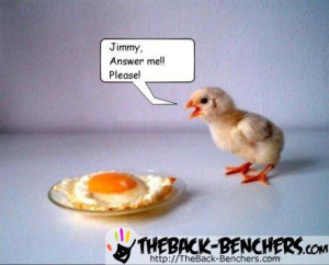 funny animals with funny sayings. cute funny animals with quotes