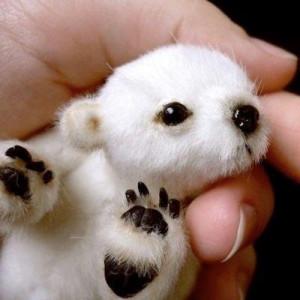 Super tiny baby Panda