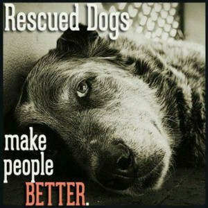 Dog Rescue..yes you have to have a rescue dog..it will change your ...