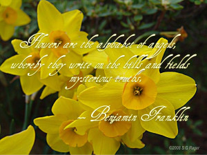 Rain-Wet Azaleas Flowers with Benjamin Franklin Quote