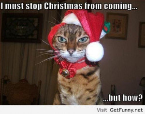 funny, funny animals, funny pics, funny pictures, funny quotes, funny ...