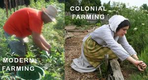 Colonial Farming Techniques Colonial-vs-modern-farming-