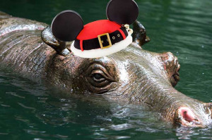 Jungle Cruise Meet Jingle Bells