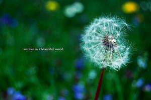 nature,beautiful,life,quote,love,life,dandelion ...