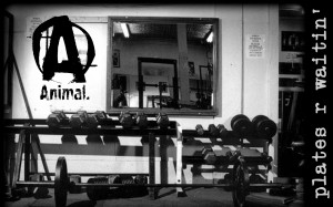 Weightlifting Animal Wallpapers