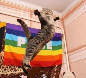 cat, funny, gay, gay pride, gays, jump, lol, pride