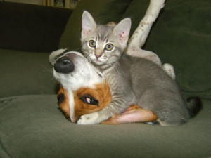 funny animals cat dog funny animals crying funny animals make