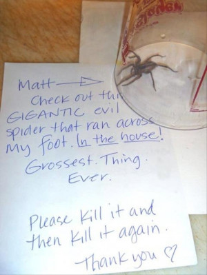 funny spider pictures
