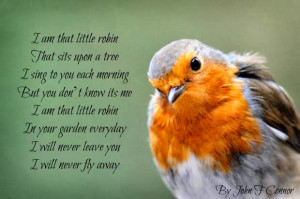 Robin Bird Quotes Quotesgram