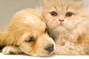 Dogs and Cats5 Love Between Dogs and Cats