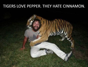 The Hangover - Funny Movie Quotes