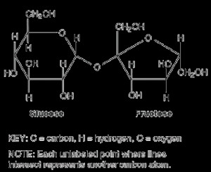 Go Back Gallery For Sucrose Molecule Tattoo/feed/rss2