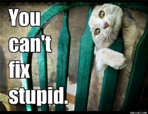 You_Can_t_Fix_Stupid