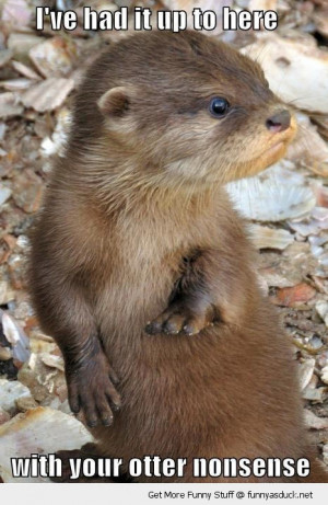 otter nonsense animal tired angry funny pics pictures pic picture ...