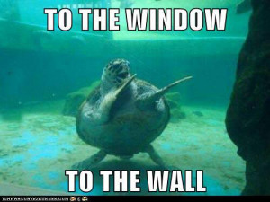 Funny dancing sea turtle - Funny Pictures, Funny jokes and so much ...