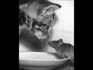 Cat and Mouse Humor Poster