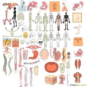 art anatomy human body human anatomy art human anatomy art