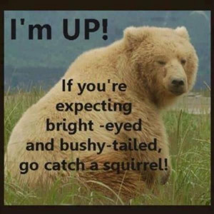 ... , Squirrels, Quotes, Bright Eye, Teddy Bears, Humor, Funny Animal