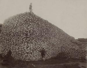 big ol' pile of bison skulls in the 1870s. The skulls were ground ...